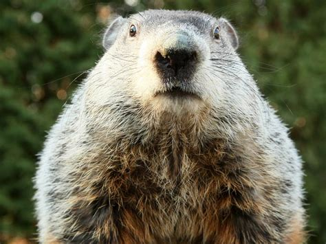 groundhog day phil reality tv to this week jan 30 to feb 5 reality