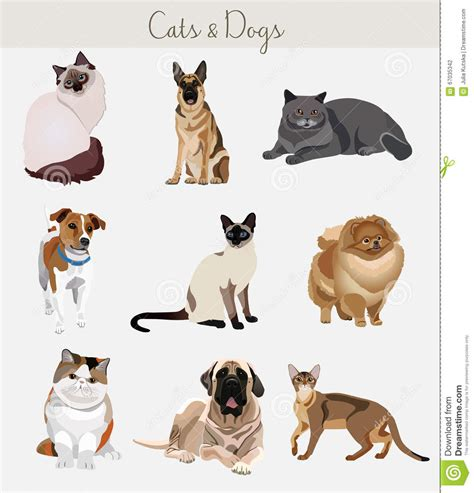 different races of dogs dogs and cats set different types stock vector image