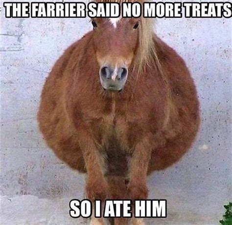 Funny Pony Memes - 1000 ideas about horse sayings on pinterest horse