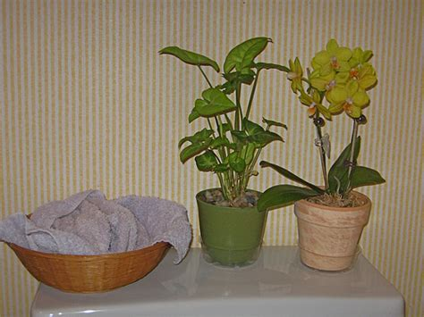 Plants In Bathroom by Bathroom Plants Flickr Photo