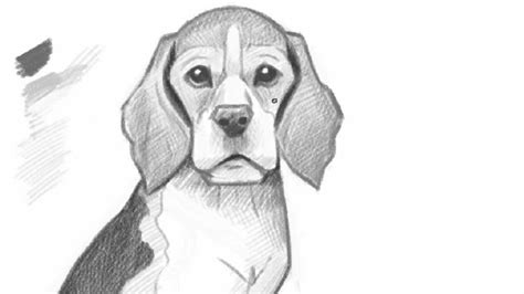 how to a beagle how to draw a beagle puppy drawing litle pups