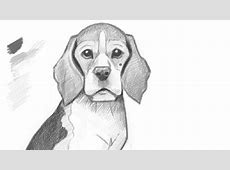 Puppy Face Drawing Displaying 19 Images For Realistic ... Easy Dog Face Drawing