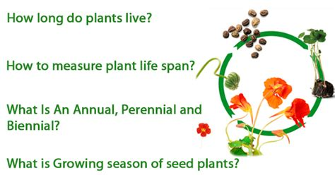 recovering the seed how to live a wholehearted books how to measure span of plants nurserylive