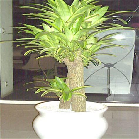 Jual Pot Anggrek Kayu tanaman hias taman dekorasi