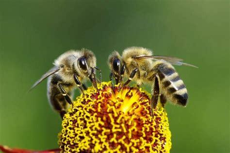 hay imagenes artisticas que producen desagrado el misterio de las abejas