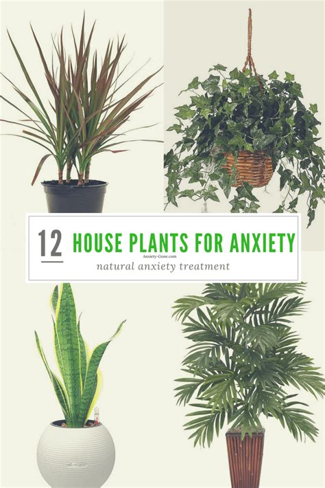 top houseplants for low medium and high light conditions house plants for sale online house plan 2017