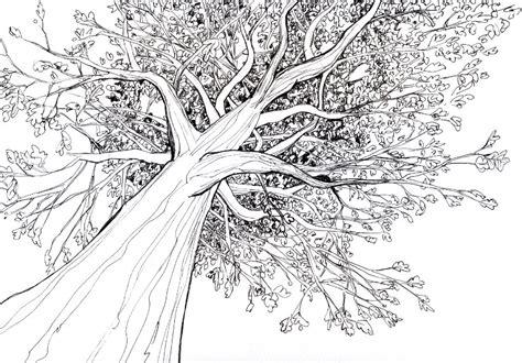 tree drawing tree drawing 3d drawing