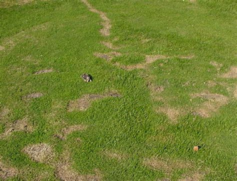 moles in backyard how to get rid of moles in your yard 6 working ways