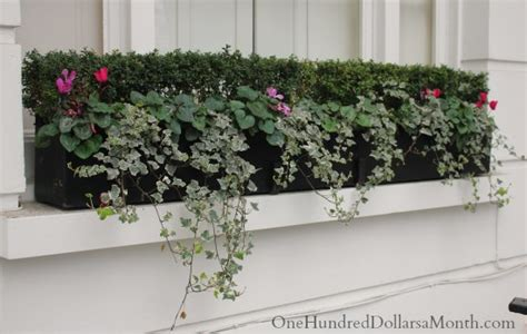 ideas for winter window boxes window box ideas for later winter and early