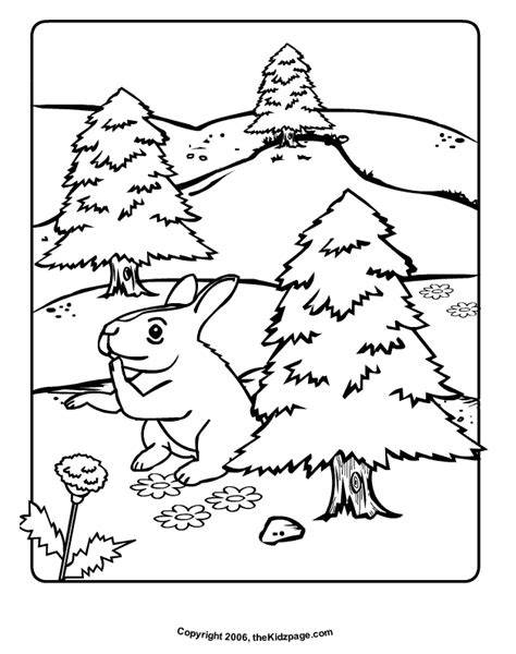 temperate rainforest coloring pages free coloring pages of temperate rain forest