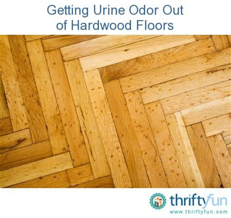 How To Get Urine Stains Out Of Hardwood Floors by How To Get Urine Odor Out Of Hardwood Floor Home Design Ideas