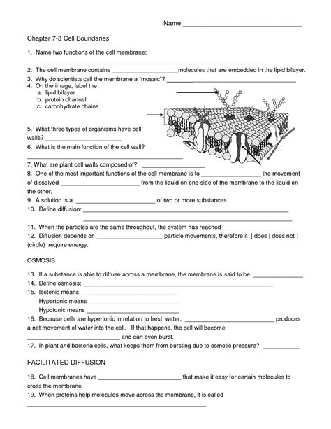 images  cell membrane labeling worksheet cell
