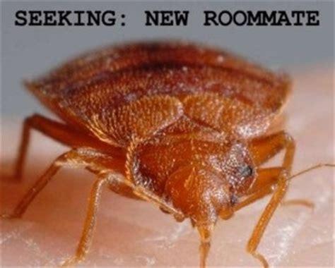early signs of bed bugs early signs of bed bug infestations in toronto