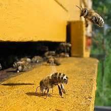 backyard beekeepers association bee blog backyard beekeepers association