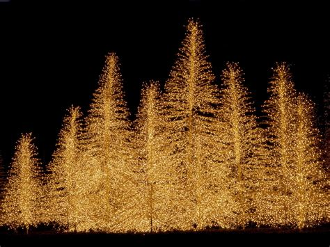 christma tree lights trees wallpaper 2736137 fanpop