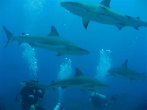dive roatan diving roatan