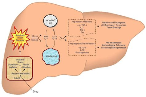 pattern analysis of drug induced skin diseases drug induced liver disease causes symptoms treatment