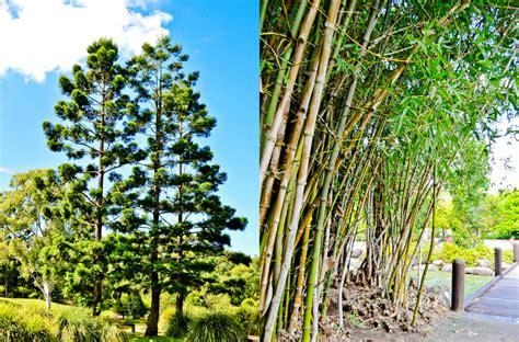 Gold Coast Regional Botanic Gardens Weekends With Angie Part Iv Gold Coast Regional Botanic Gardens Angie Do Stuff