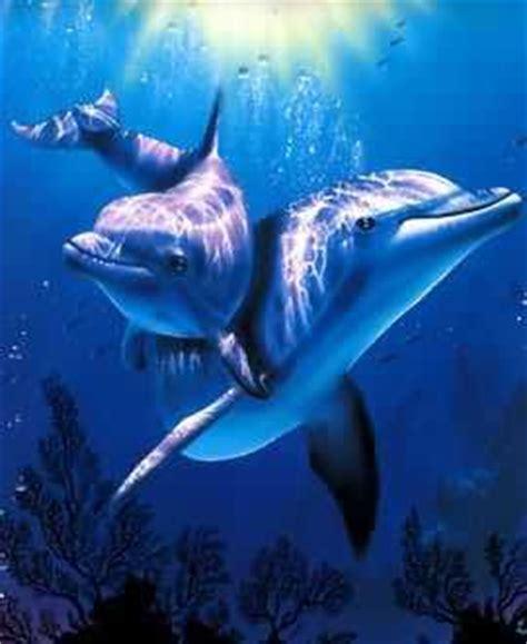 imagenes de amor animadas de delfines im 225 genes de amor con delfines enamorados imagenes de