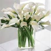 fiori si regalano alla laurea fiori per fiocco azzurro frasi per una nascita fiocco