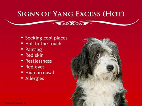 yin yang nutrition for dogs maximizing health with whole foods not drugs books notes on and cold foods for dogs room