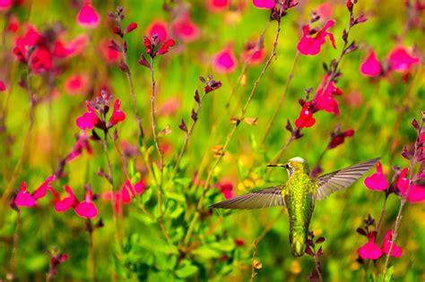 colibr fondos de pantalla 1920x1200 432 fondos de pantalla trochilidae aves animalia flores