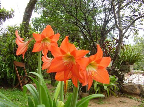 fotos de lirios flores picture to pin on pinterest pinsdaddy pin fotos de lirios flores on pinterest