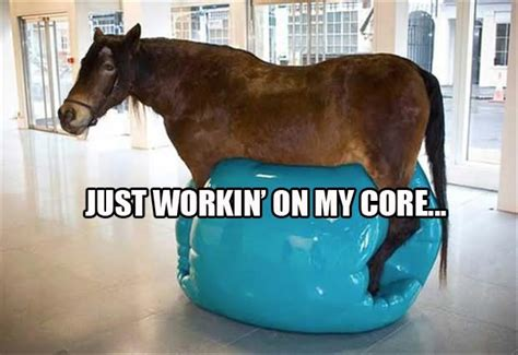 funniest exercise animal pictures