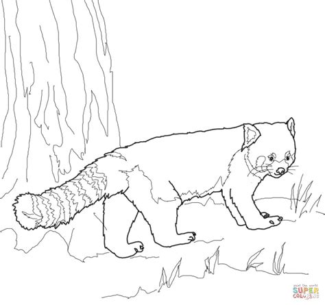 cute red panda coloring coloring pages
