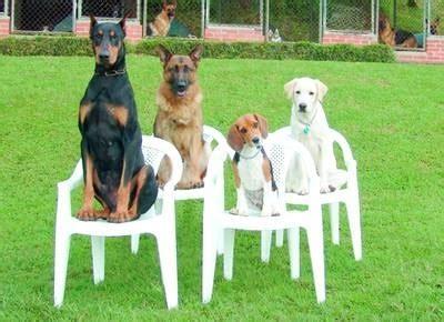 i cani testi test cani allevamento cani