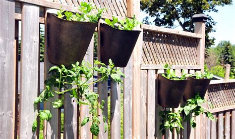 Tomato Hanging Planter by Hanging Tomato Planter Garden365