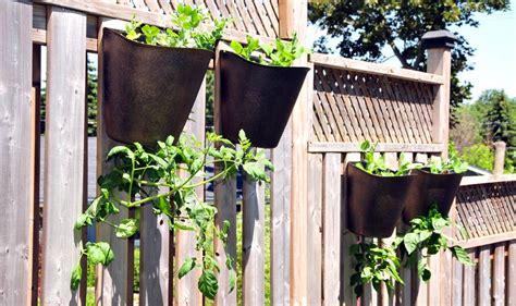 hanging tomato planters hanging tomato planter garden365