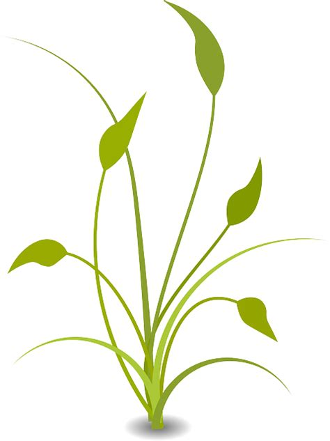wallpaper bunga mawar vektor gambar vektor gratis tanaman daun pascasarjana hijau