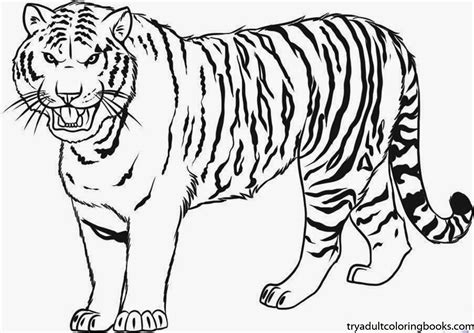 Tiger Coloring Page 4 Mature Colors Tiger Color Page
