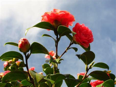 winterharte pflanzen für den garten winterharte pflanzen den garten das ganze jahr lang