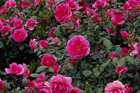 beautiful garden flower image collection beautiful flower garden wallpapers