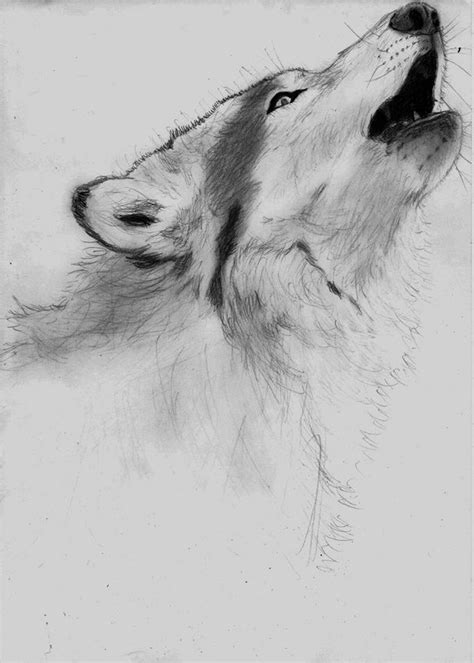 wolf via facebook image 1070643 by nastty on favim com