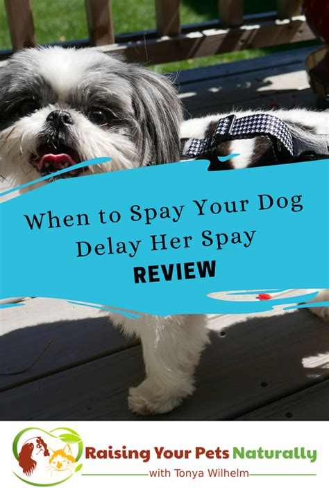 when to neuter puppy when to neuter or spay a delay spay review raising your pets naturally