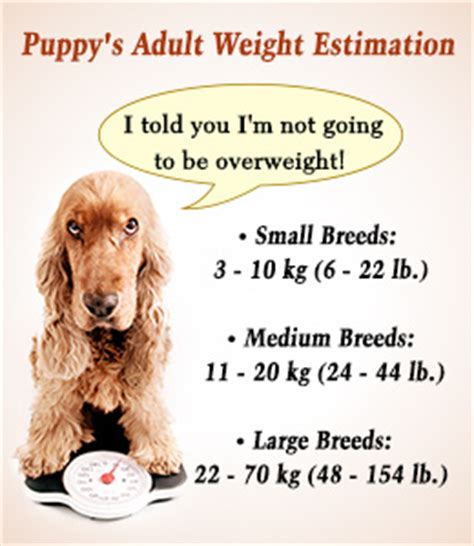 food calculator by breed puppy weight calculator mixed breeds picture