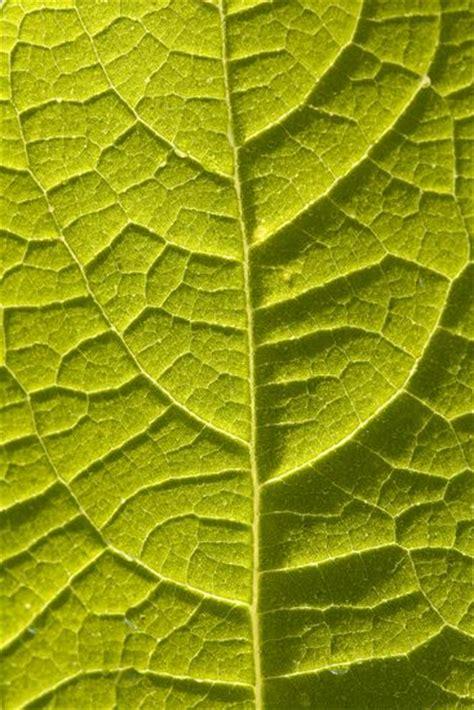pattern leaf veins leaf vein patterns 171 free patterns