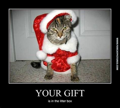 cat santa isn t very nice fun cat pictures
