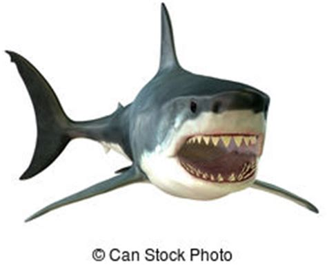 Great White Shark Clip by Great White Shark Illustrations And Clipart 1 044 Great