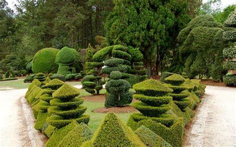 pearl fryar topiary garden courtyard garden ideas