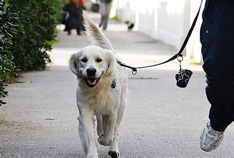 animali da cortile normativa 57 articoli il nuovo codice per i diritti degli animali