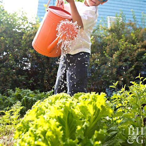 Best Time To Water Vegetable Garden What S The Best Time Of Day To Water Vegetables