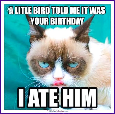 Birthday Cat Meme - happy birthday memes with funny cats dogs and cute