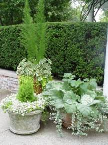containers for garden plants whitish grouping against darker patio fence or green