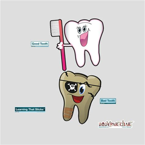 Medium Tooth Replika Cc tooth bad tooth bodypartchart official site