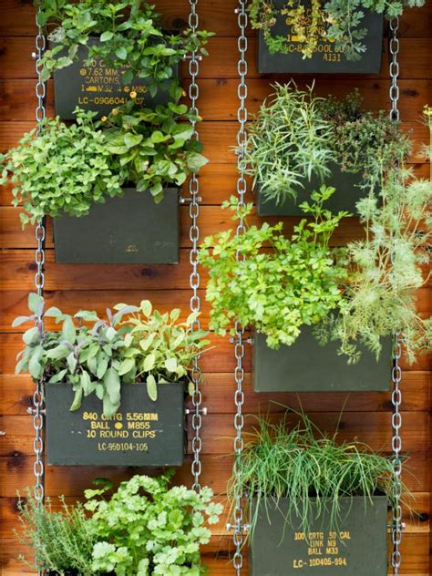hanging wall gardens succulents hops and more plants in millennial gardens