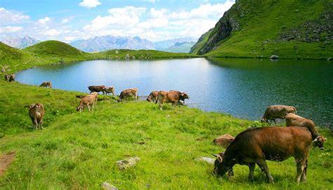 imagenes de paisajes y animales hermosos quedaras encantado con estos paisajes naturales con